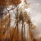 Misty Autumn by Cyn  Valentine