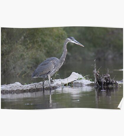 Blue Heron on the Milwaukee River Poster
