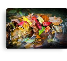 Fall Leaves in a Stream Canvas Print