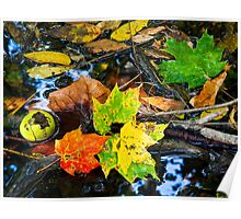 Wet Fall Forest Floor Poster