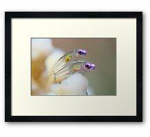 Transparent Framed Print