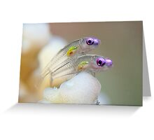 Transparent Greeting Card