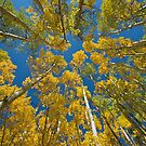 Below the Aspens by Luann wilslef