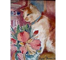 Marmelade Cat Photographic Print