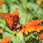Gulf Fritillary Butterfly by AuntDot
