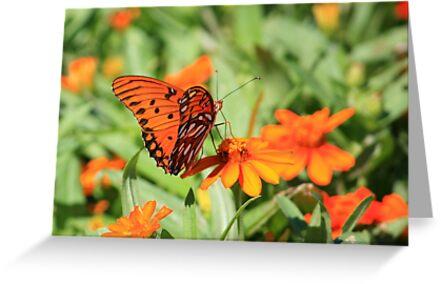 Gulf Fritillary Butterfly by AuntDot