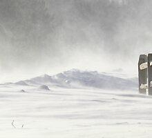 Snow Swirl by reindeer