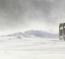 Snow Swirl by Kelly Chiara