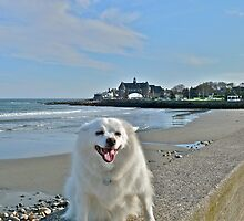 Last Great Beach Day - Sylvie At Narragansett Beach by Jack McCabe