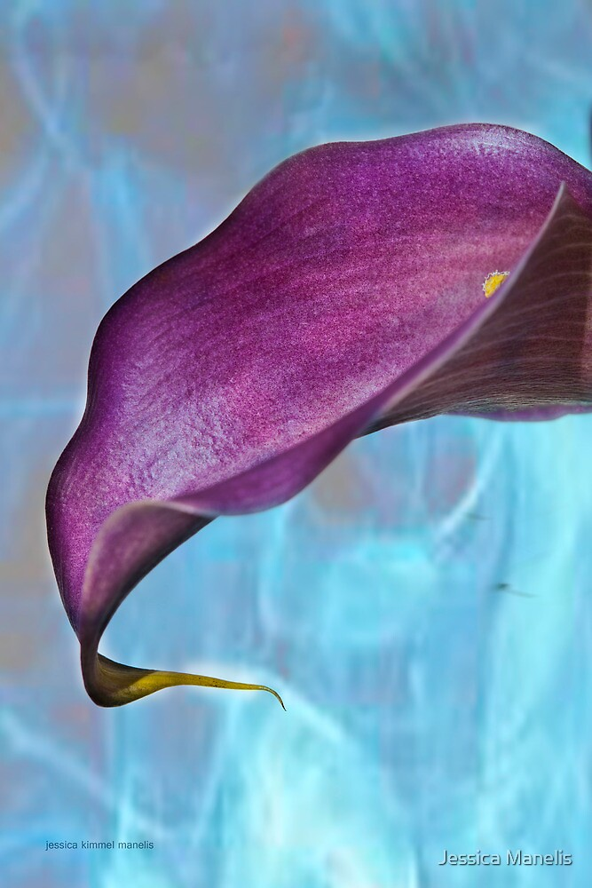 Calla Lily Typify by Jessica Manelis