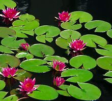 Magenta & Green Lily Pads by Joe Jennelle