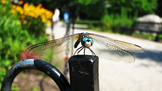 Dragon fly will be your guide by rfazio121