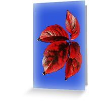 A Splash of Autumn Greeting Card