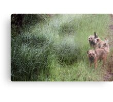 Three Little ShihTzu Metal Print