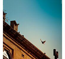 Pigeon in flight Photographic Print