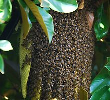 Hive by Ron Hannah