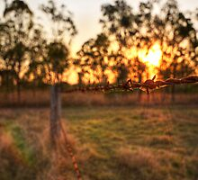 Barbed Sunset by Luke Griffin