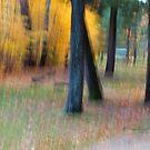 Trees - 25 - Impressions by Yannik Hay