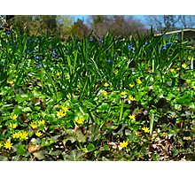 Stirrings of early Spring Photographic Print