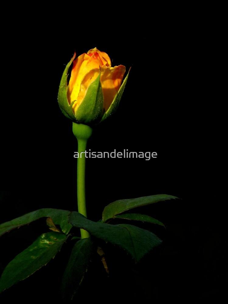 Roses Of Portland ~ Part Four by artisandelimage