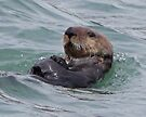Portrait of a sea otter by Margaret  Hyde