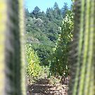 Napa Valley Vines and View by Mardra
