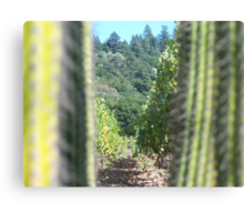 Napa Valley Vines and View Canvas Print