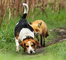 Probably the world\'s worst hunting dog by MIRCEA COSTINA