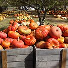 Bountiful Pumpkins! by Stephen D. Miller