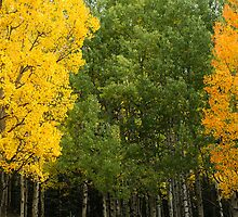 Autumn Color in Pike National Forest  by somethingformed