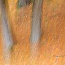 Trees - 10 - Impressions by Yannik Hay