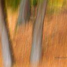 Trees - 9 - Impressions by Yannik Hay