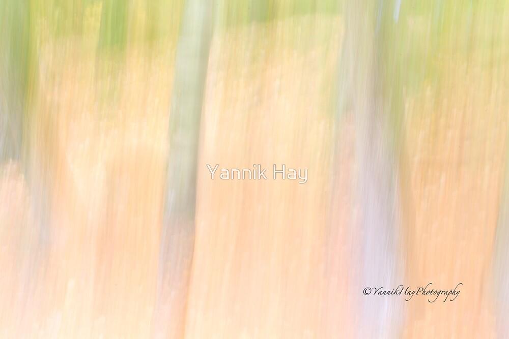 Trees - Impressions by Yannik Hay