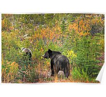 Mother bear and her cub Poster