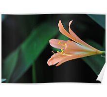 Orange blossom in the rainforest Poster