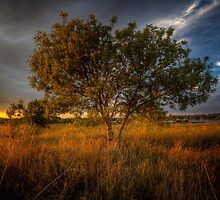 Sundown Tree by Bob Larson