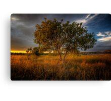 Sundown Tree Canvas Print