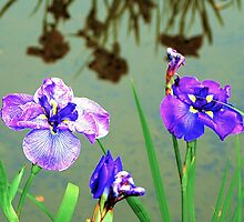 Flowers and Reflection of Flowers by Bob Wall