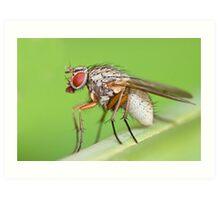 Fly Resting On Leaf Art Print