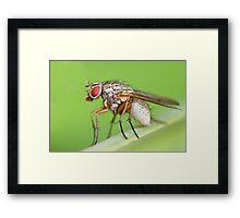 Fly Resting On Leaf Framed Print
