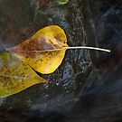 Two Leaves by Steve Mills