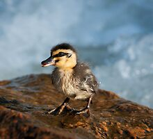 """This Little Duck"" by Heather Thorning"