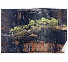 Pandanis on Nourlangie Rock - Kakadu National Park, Northern Territory, Australia Poster