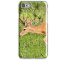 Young Buck (Odocoileus virginianus) iPhone Case/Skin
