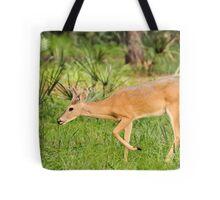 Young Buck (Odocoileus virginianus) Tote Bag