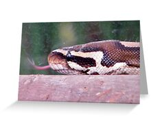 I speak with forked tongue !! Greeting Card