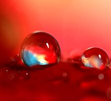 Candy Red by Sharon Johnstone