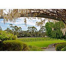 Winery Pleasure... Photographic Print