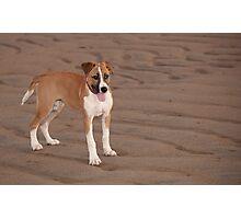 Bella on the beach Photographic Print