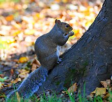 one squirrell by Joyce Knorz